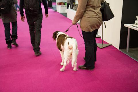 Собака на выставке PaperWorld 2013